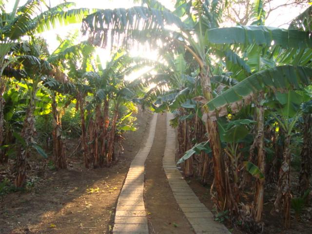 finca con arboles frutales y madera preciosa casas nicaragua On arboles frutales precios